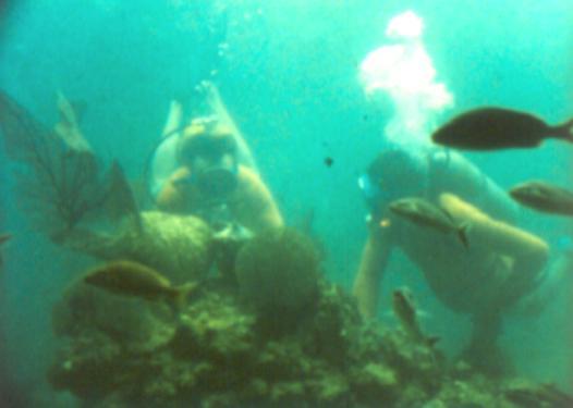 IYHW Divers
